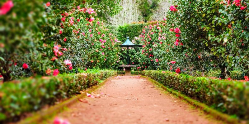 Pathway in garden leading to an empty table